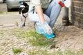 Female Picking Up Dog Feces Royalty Free Stock Photo