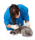 Female professional vet doctor examining a cat's ear with an otoscope