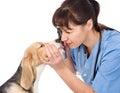 Female professional vet doctor examining pet dog eyes. isolated Royalty Free Stock Photo