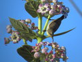 Female purple sunbird feeding on nector puprple is its main food flower s due to vibrant blue sky and light green color of plant Royalty Free Stock Images