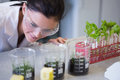 Female researcher looking at young plants at lab the laboratory Royalty Free Stock Photo