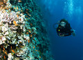 Female scuba diver on colorful foral reef Royalty Free Stock Photos