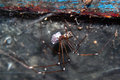 Female spider with egg sac a web in a safe place Stock Photo