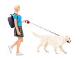Female student walking a dog Royalty Free Stock Image