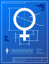 Female symbol like blueprint drawing Stock Photos