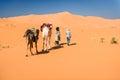 Female tourist and nomadic berber leading 2 camels through desert Royalty Free Stock Photo