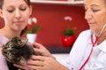 Female vet examines a cat Royalty Free Stock Photo