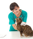 Female vet in green uniform with cat in surgery white background Royalty Free Stock Photos