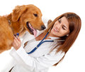 Female veterinarian Stock Images