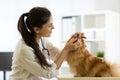 Female veterinarian examining teeth of Spitz dog in clinic Royalty Free Stock Photo