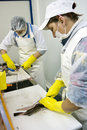 Female workers filleting fish Royalty Free Stock Photo