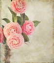 Feminine camellia flowers with vintage texture pink perfection camellias in an antique medicine bottle photo has been creatively Royalty Free Stock Photography