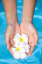 Feminine hands holding fragrant frangipani flower Royalty Free Stock Photography
