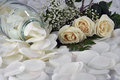 Feminine white roses along with baby s breath Stock Images