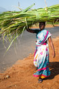 Femme indienne dans la balle de foin de transport de sari coloré sur la tête Image stock