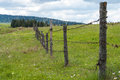 Fence with barbed wire. Fence in the field. Meadow grass with flowers. Royalty Free Stock Photo