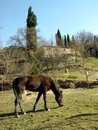 Fence de casei full blooded horse while graze the grass nine years old eat and plays in tne in italians appennini in a panoramic Royalty Free Stock Photography