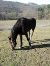 Fence de casei full blooded horse while graze the grass nine years old eat and plays in tne in italians appennini in a panoramic Royalty Free Stock Image