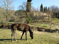 Fence de casei full blooded horse while graze the grass nine years old eat and plays in tne in italians appennini in a panoramic Royalty Free Stock Photos
