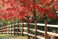 Fence in the Fall Royalty Free Stock Photo
