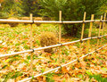 Fence poles in japanese garden Stock Image