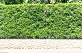 Fence tree shrubbery on stone base Royalty Free Stock Photography