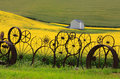 Fence of wheel rims against rapeseed farms Stock Image