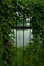 Fence and Wild Plants Royalty Free Stock Photo