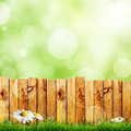 Fence wooden and green grass with white camomile flower against green bokeh sky background Stock Photos