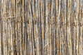 Fence of young bamboo Royalty Free Stock Photo