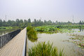 Fenced and planked footway in lotus pond on summer day sunny Stock Photo