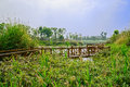 Fenced wooden footbridge along verdant lakeshore in sunny spring Royalty Free Stock Photo