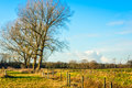 Fences and leafless trees in a rural landscape Royalty Free Stock Photo