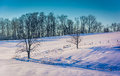 Fences and trees on a snow covered hill in rural York County, Pe Royalty Free Stock Photo