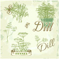 Fennel dill herb and plant background packaging calligraphy Stock Image