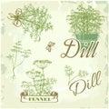 Fennel, dill, herb,