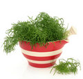 Fennel Herb Royalty Free Stock Image