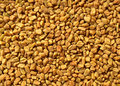 Fenugreek Stock Photo