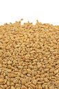 Fenugreek close up dried seeds of Royalty Free Stock Image