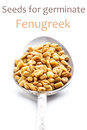 Fenugreek seeds Royalty Free Stock Images