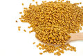 Fenugreek seeds in a spoon Royalty Free Stock Photography