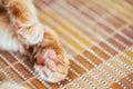 Fermez vous vers le haut de paw pads peaceful red cat Images libres de droits
