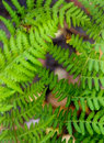 Fern  background Royalty Free Stock Photography