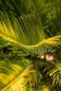 Fern background - Royalty Free Stock Images