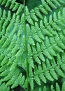 Fern background close up of fresh green leaf of Stock Images