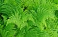 Fern background green fresh nature Stock Photos