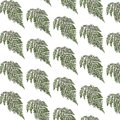 Fern background leaves that fill a with a seamless pattern Royalty Free Stock Photos