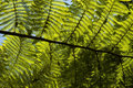 Fern in backlight Royalty Free Stock Photo