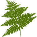 Fern branch Royalty Free Stock Photography