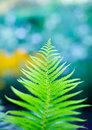 Fern branch close-up Royalty Free Stock Photo